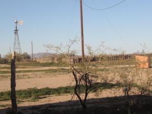 arizona 046